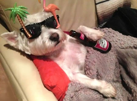 Dog High on Beer